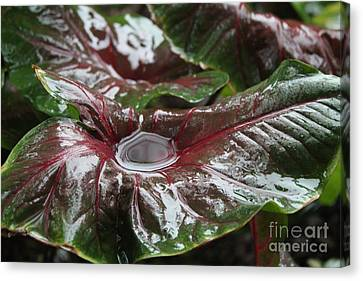 Caladium Puddle Canvas Print by Theresa Willingham