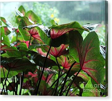 Caladiums In The Rain Canvas Print by Theresa Willingham