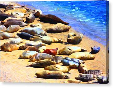 California Sunbathers . Harbor Seals Canvas Print by Wingsdomain Art and Photography