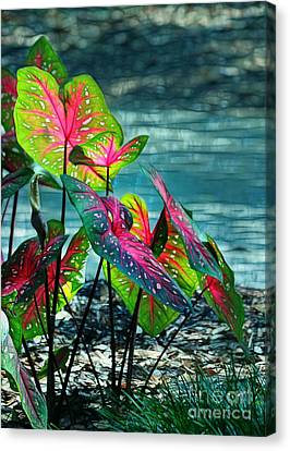 Calladiums Canvas Print by Judi Bagwell
