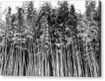 Canes At Canebrake Canvas Print by Brenda Bryant