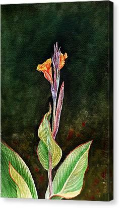 Canna Lily Canvas Print by Irina Sztukowski