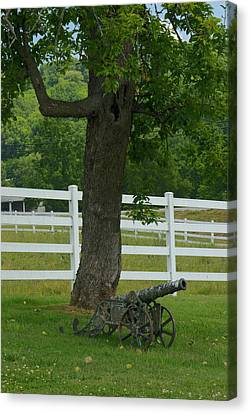 Cannon Tree And Fence Canvas Print by Douglas Barnett