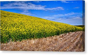 Canola And Stubble Canvas Print by David Patterson