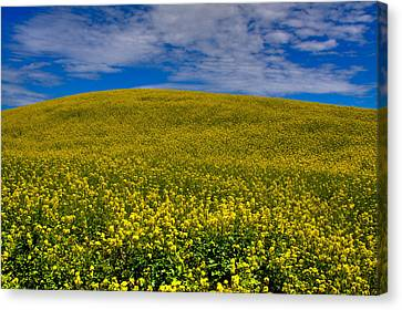 Canola Field In The Palouse Canvas Print by David Patterson