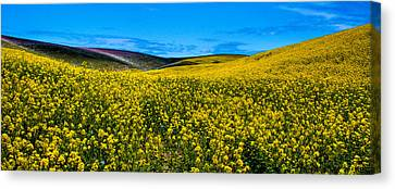 Canola Hills In The Palouse Canvas Print by David Patterson