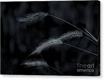 Can't Be Broken Canvas Print by Kim Henderson