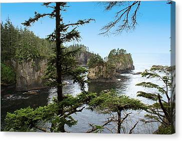 Cape Flattery Canvas Print by Christy Leigh