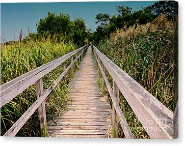 Cape Hatteras Canvas Print by Gerlinde Keating - Keating Associates Inc