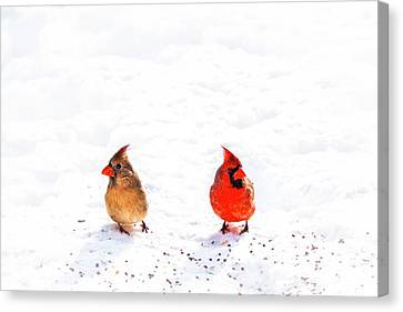 Cardinal Couple II Canvas Print by Tamyra Ayles