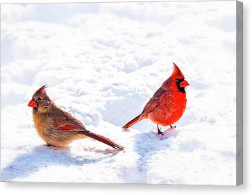 Cardinal Couple Canvas Print by Tamyra Ayles