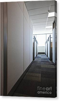 Carpeted Hall With Office Cubicles Canvas Print by Jetta Productions, Inc