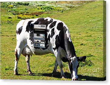 Cash Cow . 7d16140 Canvas Print by Wingsdomain Art and Photography