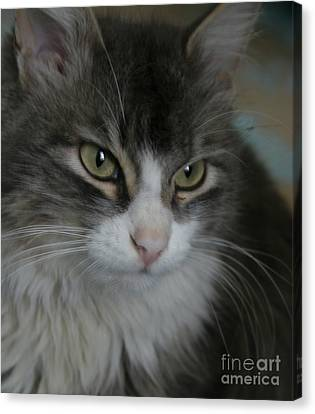cat Canvas Print by Alisa Tek