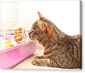 Cat And Hamster Canvas Print by Tom Gowanlock