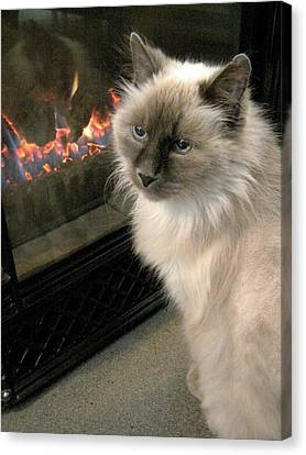 Cat And The Fireplace Canvas Print by Patricia Drohan