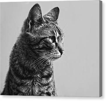 Cat Canvas Print by Chelaru Catalin Ionut