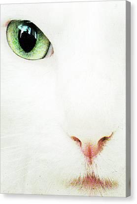 Cat Eye Canvas Print by Julie Niemela