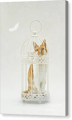Cat In A Birdcage Canvas Print by Catherine MacBride