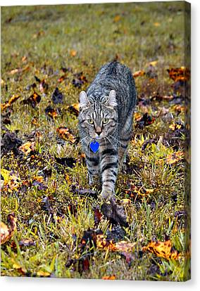 Cat In Autumn Canvas Print by Susan Leggett