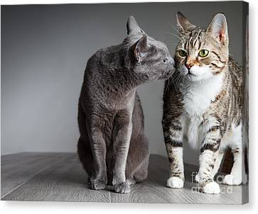 Cat Kiss Canvas Print by Nailia Schwarz
