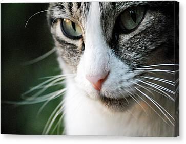 Cat Portrait Canvas Print by Julia Williams