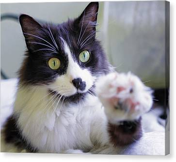 Cat Reaches For Camera Canvas Print by Lori Coleman