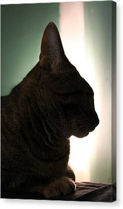Cat Silhouette Canvas Print by Nina Mirhabibi