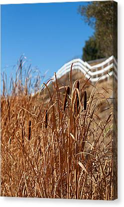 Cat Tails And Galloping Fence Canvas Print by Peter Tellone