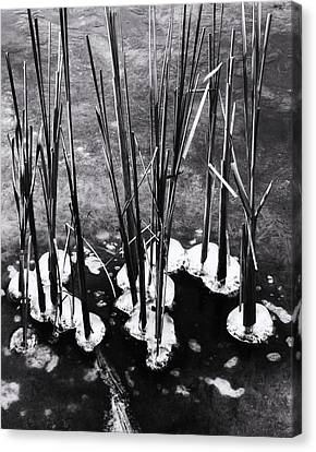 Cat-tails In Ice Canvas Print by Todd Sherlock
