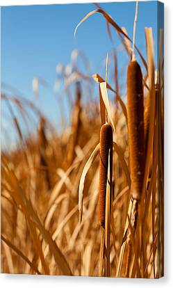 Cat Tails Canvas Print by Peter Tellone