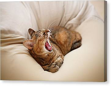 Cat Yawn On Bed Canvas Print by Junku