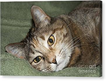 Cats Eyes Canvas Print by Michael Waters