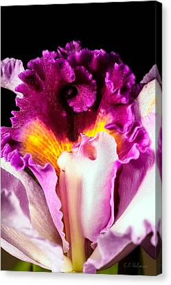Cattleya II Canvas Print by Christopher Holmes