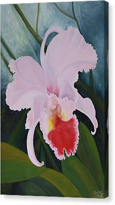 Cattleya Orchid Canvas Print by Don  Goetze