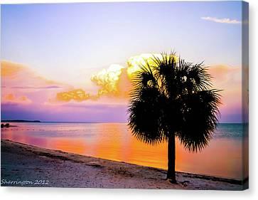 Cedar Key Sunset Canvas Print by Shannon Harrington