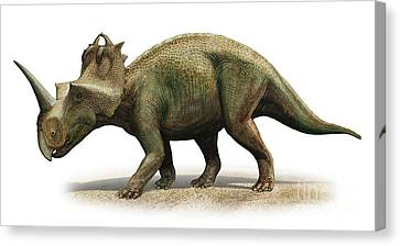 Centrosaurus Apertus, A Prehistoric Era Canvas Print by Sergey Krasovskiy