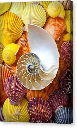Chambered Nautilus  Canvas Print by Garry Gay