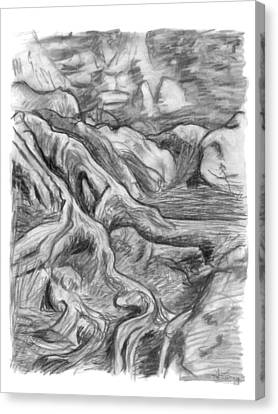 Charcoal Drawing Of Gnarled Pine Tree Roots In Swampy Area Canvas Print by Adam Long