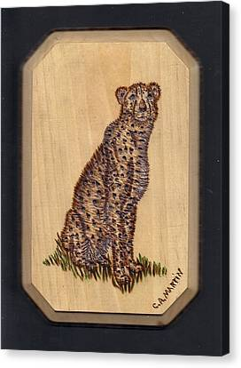 Cheetah Canvas Print by Clarence Butch Martin