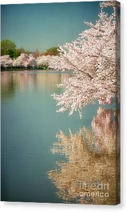 Cherry Blossoms Along The Tidal Basin Two Canvas Print by Susan Isakson