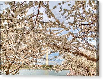 Cherry Blossoms Washington Dc 3 Canvas Print by Metro DC Photography
