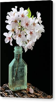 Cherry Green Canvas Print by JC Findley
