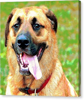 Chiko Canvas Print by Dorrie Pelzer