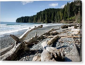 China Driftwood China Beach Juan De Fuca Provincial Park Bc Canvas Print by Andy Smy