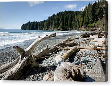 China Driftwood China Beach Juan De Fuca Provincial Park Bc Canvas Print by Andy Smy