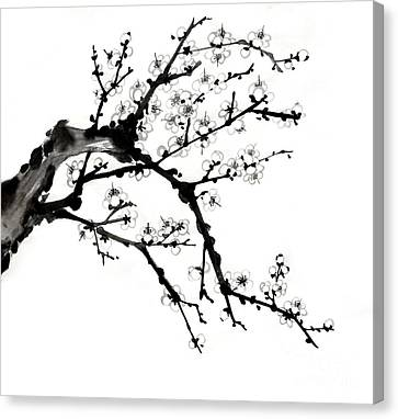 Chinese Ink Plum Blossom Painting Canvas Print by Evelyn Sichrovsky