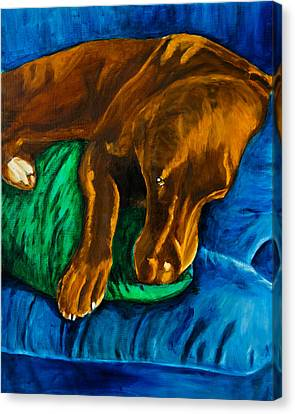 Chocolate Lab On Couch Canvas Print by Roger Wedegis