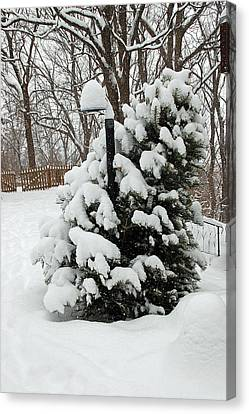 Christmas Tree Canvas Print by Aimee L Maher Photography and Art Visit ALMGallerydotcom