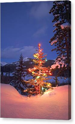 Christmas Tree Outdoors At Night Canvas Print by Carson Ganci